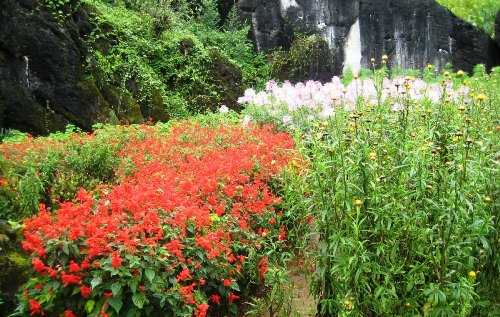 sapa, lao cai, ham rong moutain, flowers