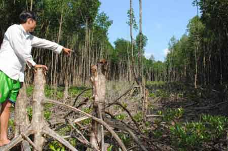 Ca Mau Park, illegal logging, strictly punish violations