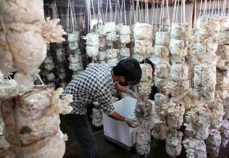 Bright Spark Inspires Mekong Bio Tech Rice Boom News