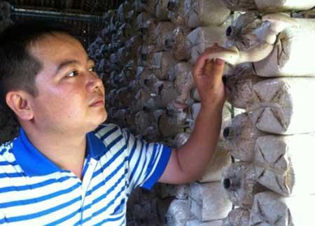 Mekong Delta, bio-tech rice, mushroom production, fertiliser