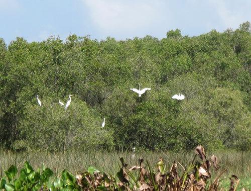 Tam Nong bird sanctuary in pictures