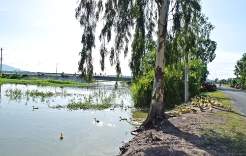 tra su cajuput forest, an giang, flooding season