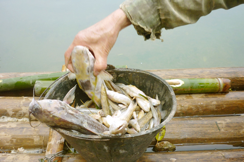 thanh hoa, buoi river, waste water, dead fish