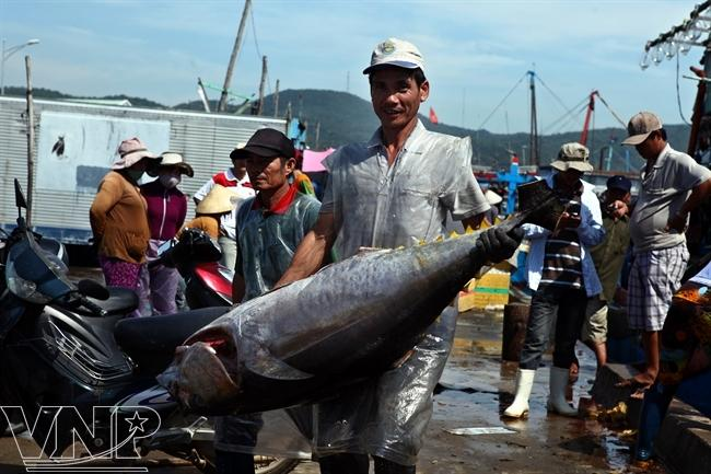 Tuna season in sa huynh news vietnamnet for Tuna fishing season