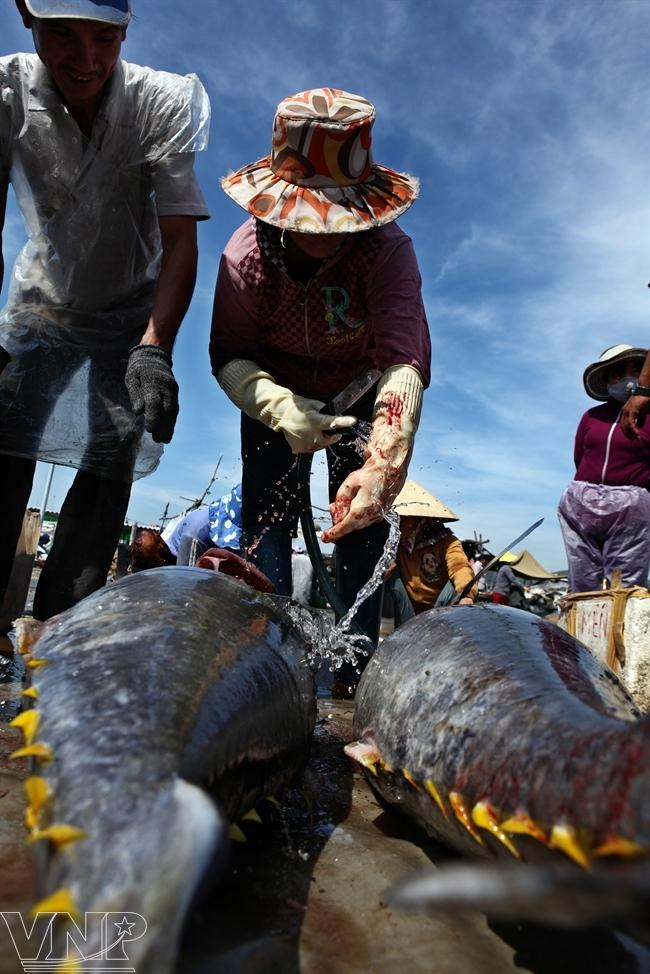 Tuna season in sa huynh news vietnamnet for Sa fishing 5 for 15