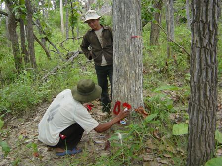 ommunity forestry, forest protection, vietnam