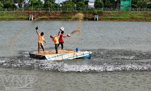Fish in Mekongt delta