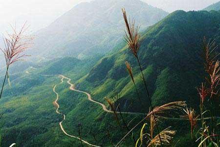 Lao Cai, Lai Chau, Hoang Lien National Park, illegal logging, deforestation