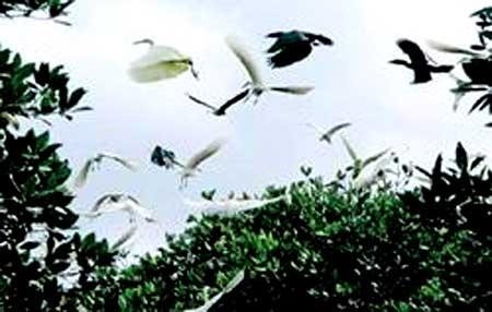 Viet Nam, natural ecosystems, wetland ecosystems