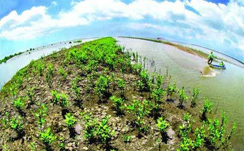 Shrimp project, Ca Mau, mangrove-shrimp farms