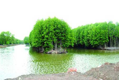 Shrimp project, Ca Mau, mangrove-shrimp farms