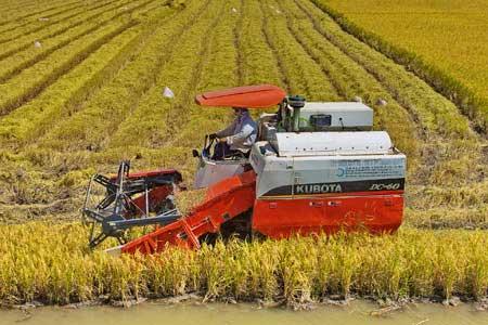 Rice, enterprises, farmers, incomes
