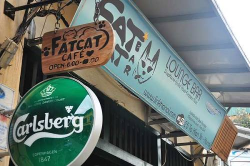 Image result for Fat Cat Bar hanoi