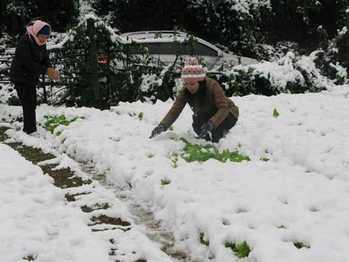 Lao Cai, Ha Giang, harshest weather conditions, snowfall