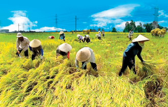 Japan's new agriculture policy, vietnam, agricultural export, japanese market