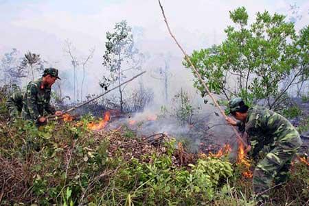 Da Nang, Ha Giang, prevention, forest fire, dry season
