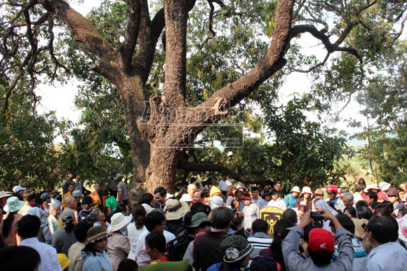 200-year mango trees recognized as heritage trees of Vietnam