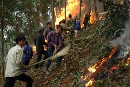 U Minh Ha National Park, dry season, forest fires, Sapa