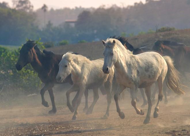 horse farm, song cong, thai nguyen, horse, racehorse