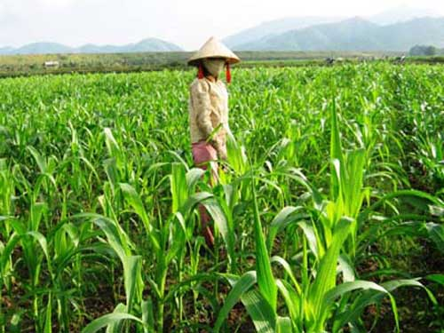 Farmers, ISAAA, genetically modified crops, biotech crops