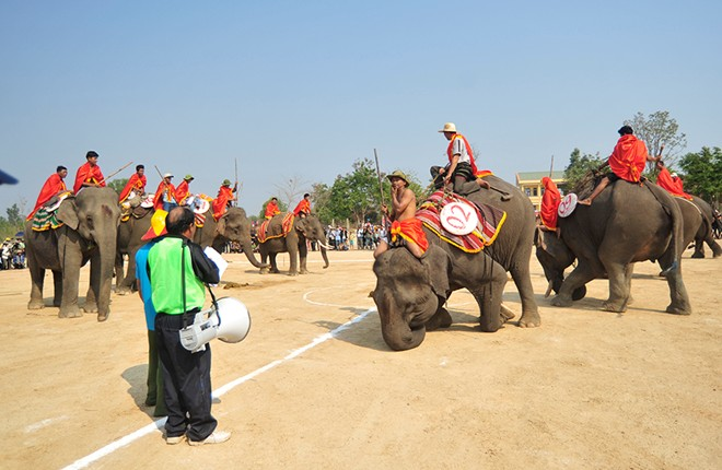 Elephants play football at the Central Highlands Festival