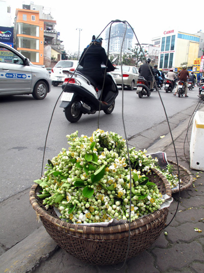 grapefruit flowers, hanoi, march