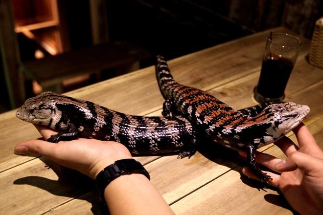 reptile cafe, pet cafe, hanoi