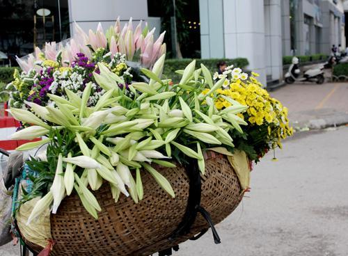 lily season, hanoi, lily