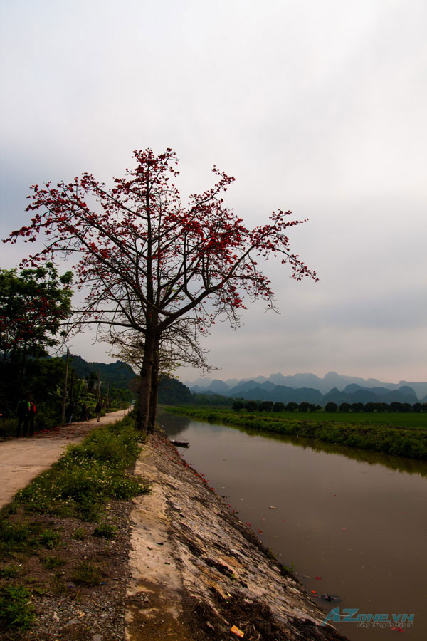 perfume pagoda, chua huong, Bombax ceiba, cotton tree flowers