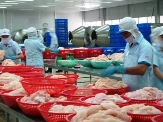 vietnam catfish case In the petition, cfa alleges that vietnam has unfairly snatched a section of the us catfish market by selling below-cost catfish the itc commissioners was to reconvene in august to publicly vote on whether or not the anti-dumping case has merit enough to move to the next step up the legal ladder.