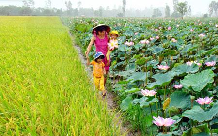 Mekong farmers, tourists, lotus flowers