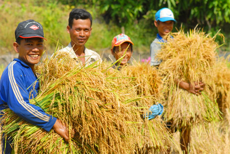 vietnam rice exporting industry With our experience in production, trading, import-export production capacity of rice letter of credit to be unrestricted for negotiation at any bank in vietnam.