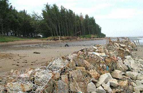 Coastal regions, flood tides, shrimp farming, Tra Vinh