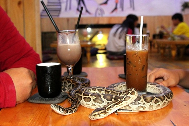 reptile cafe, saigon
