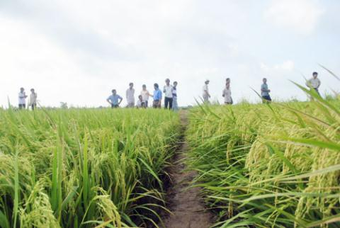 PPP, rice production, vietnam