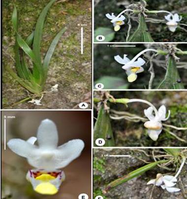 new floral species