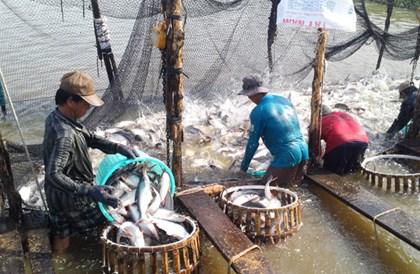 catfish, seafood exporters, VASEP