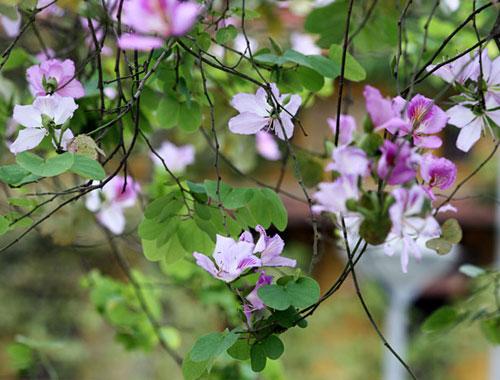food, dien dien flowers, flower food, flower cuisines