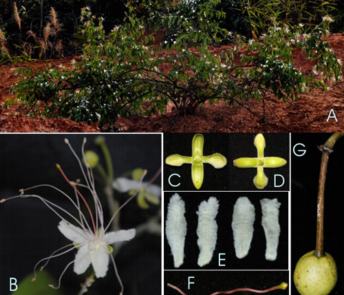 Gia Nghia (Dak Nong) Vietnam  City new picture : New plant species discovered in Vietnam News VietNamNet