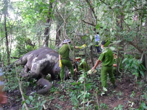 Vietnamese forests, elephants, Yon Don National Park