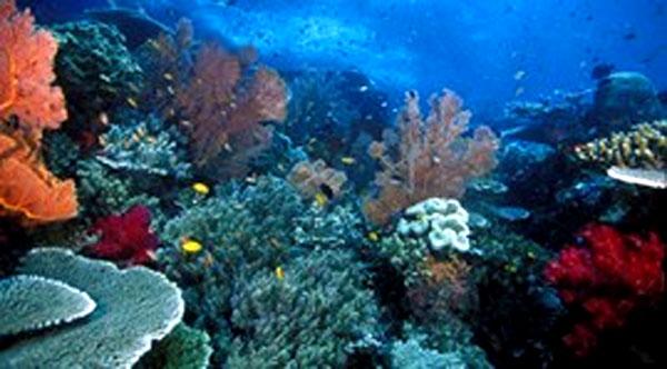 USAID, biodiversity policy, improve