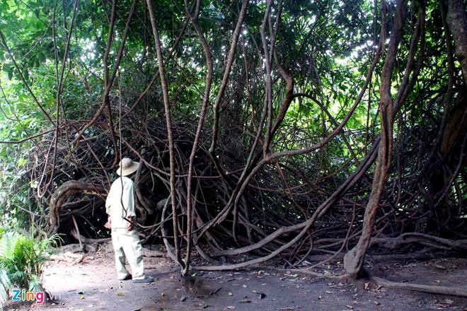 unique trees, saigon, Saigon zoo