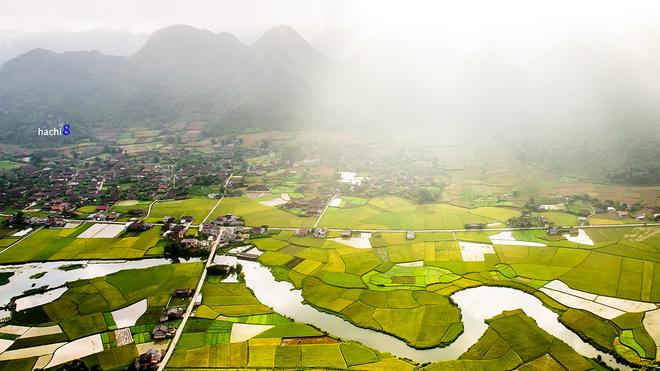 Bac Son rice fields