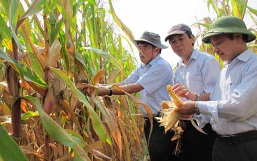 GM food, GM food production, ban