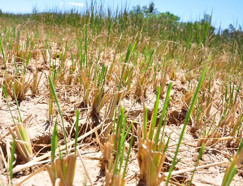 Government gives $11 million for drought relief in 14 provinces