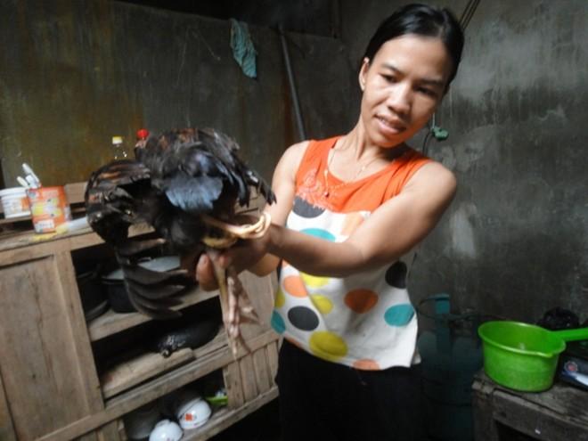 4-legged chicken