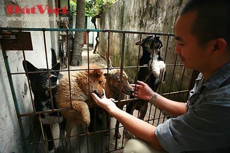 "Vietnam's ""national dogs"""