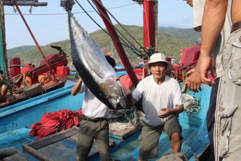 Вьетнамский экспорт тунца в Китай вырос на 253 процента