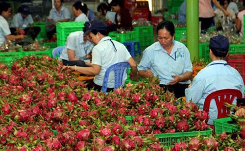 Vietnamese fruits, exporters, US market