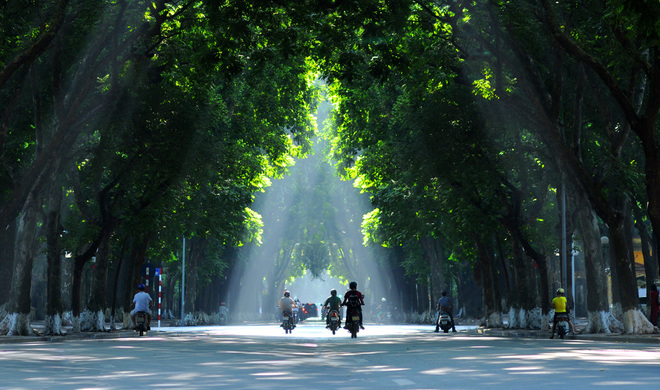The most beautiful road in Hanoi